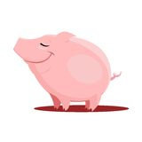 Vector Illustration of pig Stock Photos