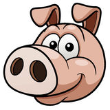 Pig face Stock Photography