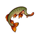 Vector illustration of pike in cartoon style Stock Images