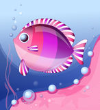 Vector illustration of pink fish Royalty Free Stock Image