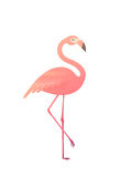 Vector illustration of a pink flamingo. Royalty Free Stock Photo