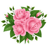 Vector illustration of pink roses Royalty Free Stock Image