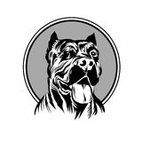 Vector illustration  pitbull mascot head, on a white background Stock Photos