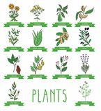 Vector illustration of a plant Stock Images
