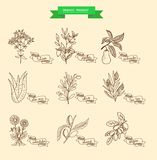 Vector illustration of a plant Royalty Free Stock Image