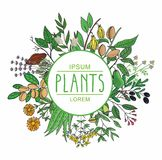 Vector illustration of a plant . plants collection Stock Photos