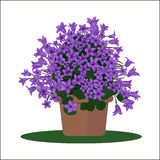 Vector illustration plant in pot. Stock Image