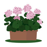 Vector illustration plant in pot. Royalty Free Stock Photography