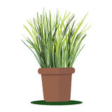 Vector illustration plant in pot. Royalty Free Stock Photo