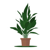 Vector illustration plant in pot Stock Image