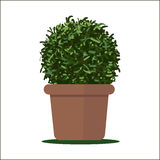 Vector illustration plant in pot. Royalty Free Stock Photos