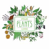 Vector illustration of plants Royalty Free Stock Photos