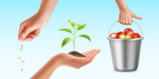 Cultivation of plant. Vector illustration of plants cultivation process. Seedling, growth and harvesting processes Stock Images