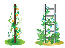 Vector illustration - plants with flowers. Vector illustration - vertical plants with flowers stock illustration