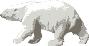 Vector illustration of a polar bear royalty free stock image