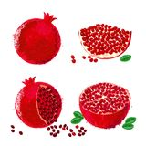 Vector illustration of pomegranate fruits Stock Image