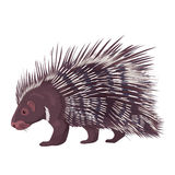 Vector Illustration Porcupine Isolated. Vector illustration of porcupine isolated on a white background Royalty Free Stock Image