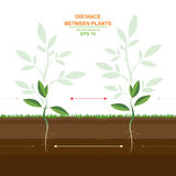 Vector illustration of proper planting. Spacing between plants. Planting distances guide. Optimal distance planting Stock Photography