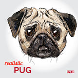 Vector illustration of pug dog head   Royalty Free Stock Photos