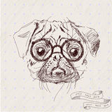Vector illustration of pug dog head Stock Photos