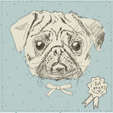 Vector illustration of pug dog head Stock Images