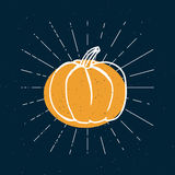 Vector illustration of pumpkin. Happy Halloween concept. Vintage rays Royalty Free Stock Images