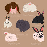 Vector illustration of rabbits. English Loop, White Downy, Dwarf Butterfly, Alaska, Meissner Lop, English Spot, Angora isolated on the white background Royalty Free Stock Photography