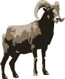 Vector illustration of a ram Royalty Free Stock Photos