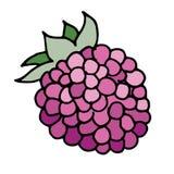 Vector illustration of raspberry Stock Photo