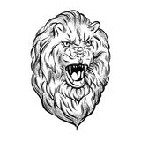 Vector illustration of realistic lion. Made in hand sketched style. Hand drawn artwork with portrait of growling animal . Template for card, poster, banner Royalty Free Stock Images