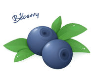 Vector illustration of realistic  ripe bilberry with leaves Royalty Free Stock Images