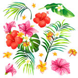 Vector illustration of a realistic style branch of a tropical palm tree with hibiscus flowers Royalty Free Stock Image
