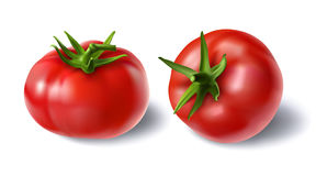 Vector illustration of a realistic style set of red fresh tomatoes with green stems. On white, top view, side view. Print, template, design element for Stock Image