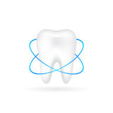 Vector illustration of realistic tooth Stock Images