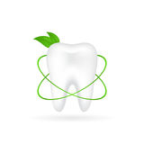 Vector illustration of realistic tooth with grassy Stock Photography