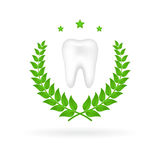 Vector illustration of realistic tooth with wreath Royalty Free Stock Image