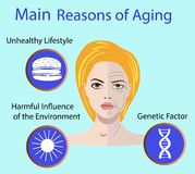 Vector illustration with reasons of aging Royalty Free Stock Images