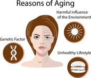 Vector illustration with reasons of aging, isolated Stock Image
