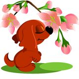 Little dog and flowers on a white background. Red dog and flowers on a white background royalty free illustration