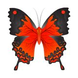 Vector illustration of a red butterfly stock illustration