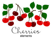 Vector illustration of red cherries. Vector illustration of cute red cherries with green leaves on white background Stock Photography