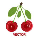 Vector illustration red cherry berries with leaves Stock Images