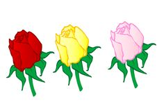 Vector illustration  red ,yellow,pink roses Royalty Free Stock Image