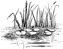 Vector illustration with reed and water lilies in the pond. Vector reeds and water lilies. Scene with lotus in the pond illustration. Black and white graphic vector illustration