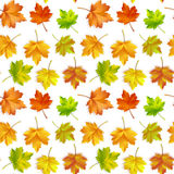 Vector illustration of a repeating pattern of maple autumn leaves. On white background stock illustration