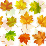 Vector illustration of a repeating pattern of maple autumn leaves. On white background vector illustration
