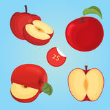 Vector illustration of ripe apple fruit and apple slices. Vector illustration of apple fruit and apple slices Royalty Free Stock Photography