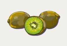 Vector illustration  ripe kiwi Stock Photo
