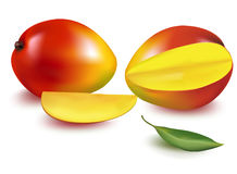 Vector illustration. Ripe mango Stock Photos