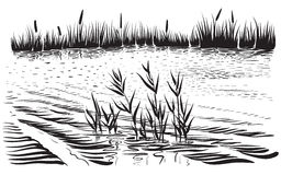 Vector illustration of river landscape with cattail and trees. Royalty Free Stock Photos